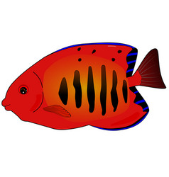 Butterfly red fish vector