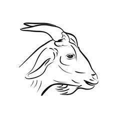 line art of goat head on white vector image