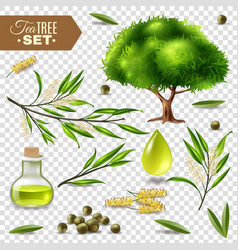 Tea tree set vector