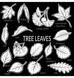 Leaves of plants pictogram set vector