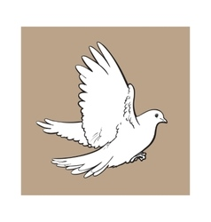 Free flying white dove isolated sketch style vector
