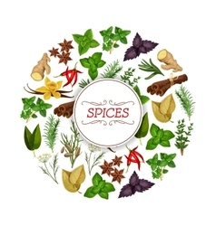Banner for seasoning herb or spice food vector