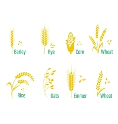 Cereals icon set with rice wheat corn oats rye vector