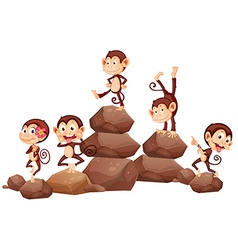 Monkeys and rocks vector