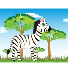 Animal zebra in savannah vector