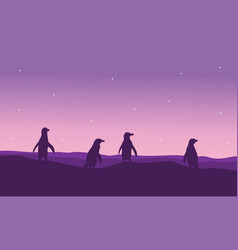 Silhouette of penguin on purple background vector