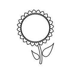 sunflower plant stem natural garden outline vector image
