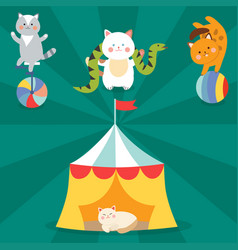 circus cats cheerful for kids vector image