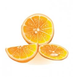 fresh orange vector image vector image