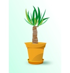 Houseplant - yucca plant in a pot vector