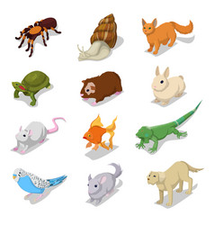 Isometric domestic animals pets vector