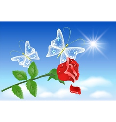 Red rose and transparent butterflies vector image vector image
