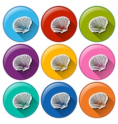 Buttons with seashells vector