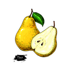 pear drawing isolated hand drawn pear and vector image vector image
