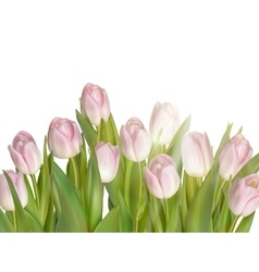 Tulips isolated on white EPS 10 vector image vector image