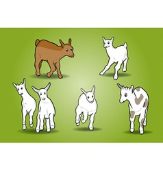Small goats on the white vector