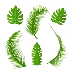 Set of summer plant decoration green palm vector