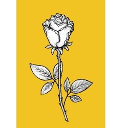 Rose Art for t-shirt design vector image