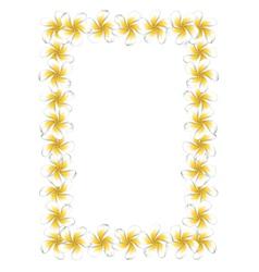 White frangipani flowers frame vector image vector image