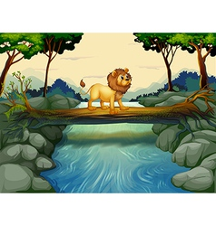 A lion crossing the river vector image