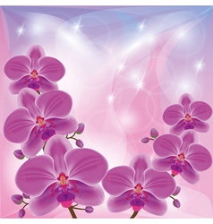 Floral background with exotic flowers orchids vector