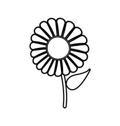 Beautiful single daisy flower outline vector