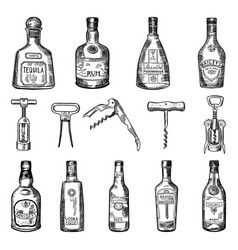 corkscrew and different wine vector image