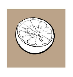 half of ripe lime sketch vector image vector image