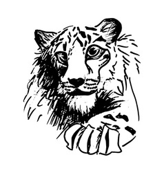 Hatching tiger vector