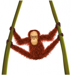 orangutan cartoon vector image vector image