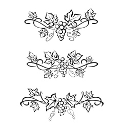 Grape branchs and leaves vector