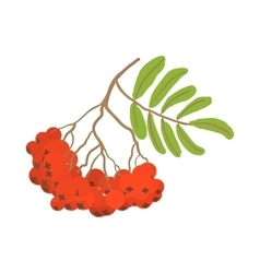 Branch of red rowan cartoon icon vector