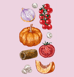 Digital detailed color vegetable hand drawn vector