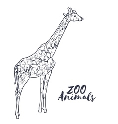 Hand drawn isolated sketch giraffe zoo animal vector