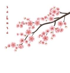 Realistic sakura blooming flowers EPS 10 vector image