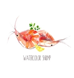 Watercolor shrimps vector