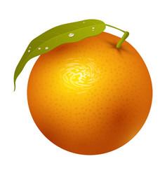 ripe orange fruits 3d citrus sweet food realistic vector image vector image