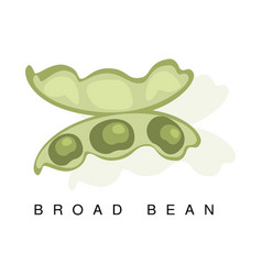 Broad bean pod infographic with vector