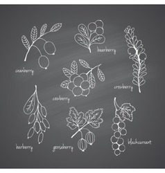 Set of garden and wild chalk hand-drawn berries vector