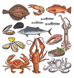 Sea food products for gourmet vector