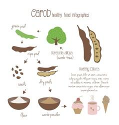 Carob infographics vector