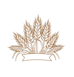gold ripe wheat ears icon vector image vector image