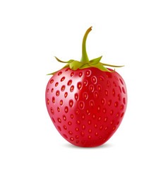 strawberry realistic icon isolated on white vector image vector image