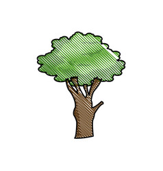Drawing tree foliage natural ecological image vector