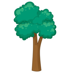 Tall tree on white background vector
