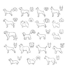 Dog breeds side view and muzzle set collection vector