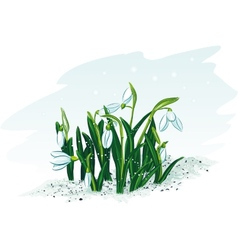 Spring flowers snowdrops vector