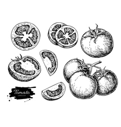 Tomato drawing set isolated tomato sliced vector