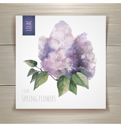 Watercolor flowers lilac vector
