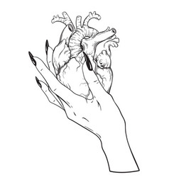 Human heart in graceful female hand isolated vector